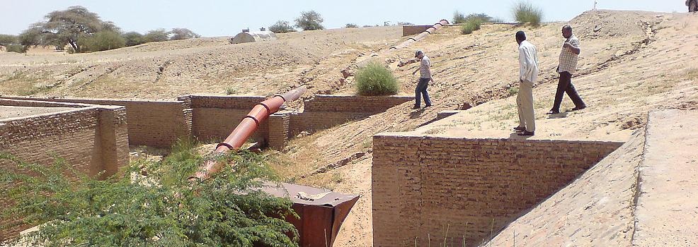 Anbau von Jatropha im Sudan