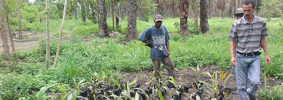 Nachhaltiger Anbau von Ölpalmen in Angola